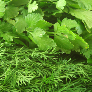 Maydonozlu Dereotlu Salata Sosu  (Parsley and Dill Dressing) ( 0,75 kg )
